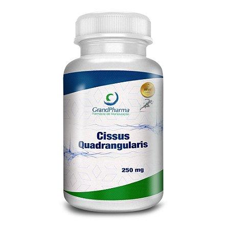 Cissus quadrangularis (250mg - 60 cáp)