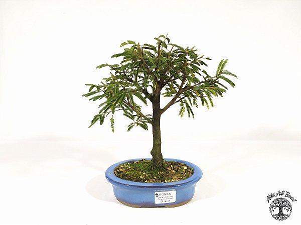 Bonsai Calliandra Rosa  ( 20 cm altura)
