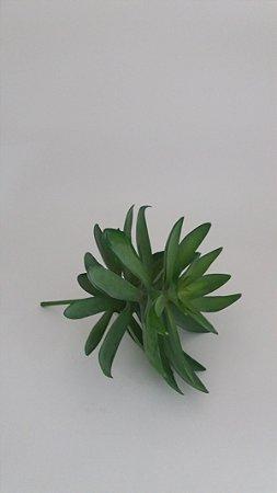Suculenta 01 Ramo - 19cm