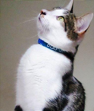 Coleira de Identificação Personalizada para Gatos
