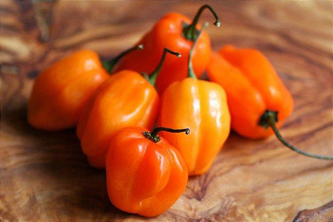Pimenta Orange Habanero: 20 Sementes