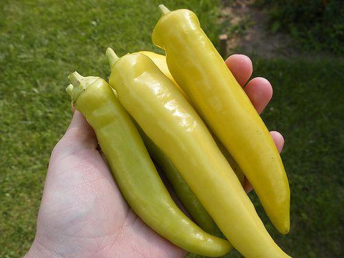 Pimenta Banana Pepper: 20 Sementes
