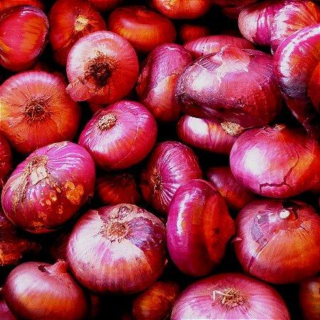 Cebola Red Cipollini ORGÂNICO: 50 Sementes