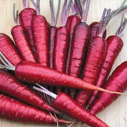 Cenoura Red Atomic: 20 Sementes