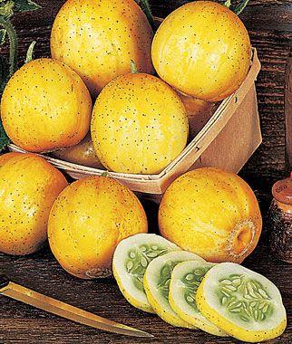 Pepino Limão (Lemon): 15 Sementes