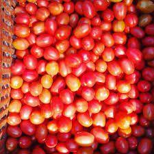Tomate Camaquã Vermelho Organico Brasil 0,5g