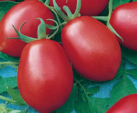 Tomate IPA 6: 20 Sementes