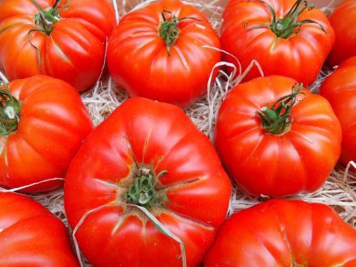 Tomate Gaúcho-Maça (Marmande): 20 Sementes