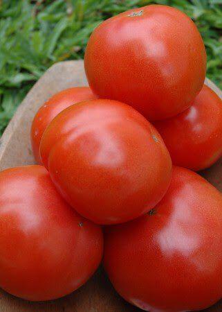 Tomate Kaiçara (Caiçara): 20 Sementes