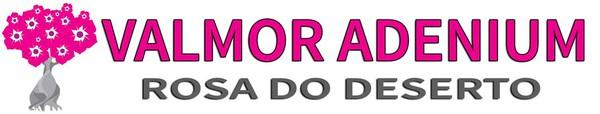 ROSA DO DESERTO ADENIUM
