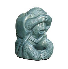 Macaco Cego