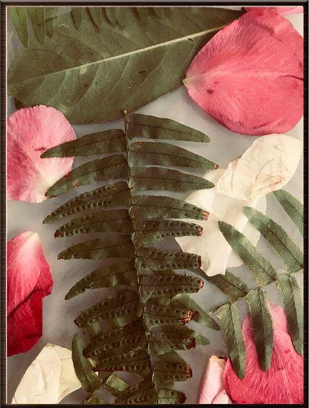 Planta VIII