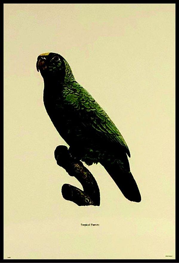 Pássaro IX