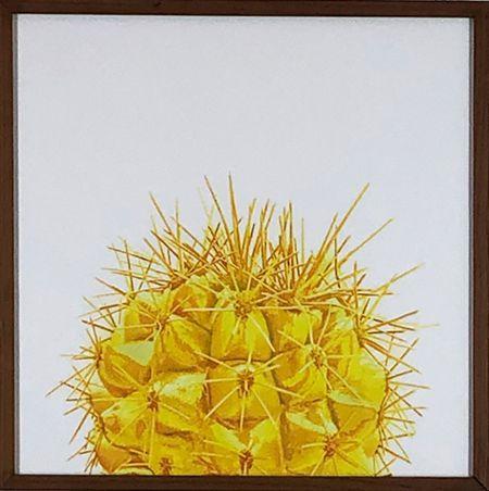 Cacto Amarelo