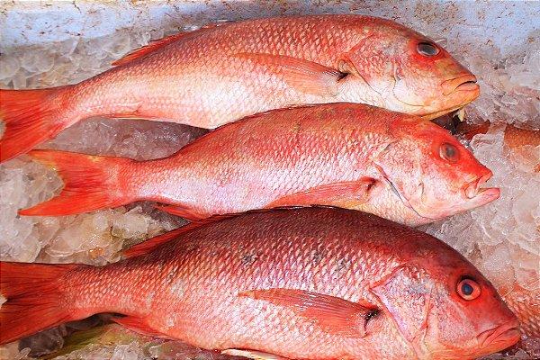 Pargo - Red Snapper - Lutjanus Purpureus - Amazon Export