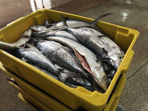 Peixe Serra Exportação