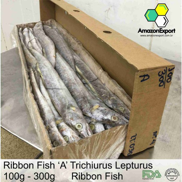 Ribbon Fish - Peixe Espada - Amazon Export