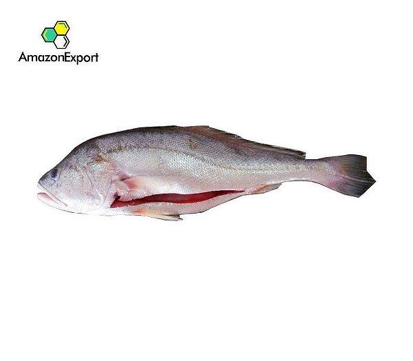 CORVINA WHITE (Plagioscion squamosissimus) -  Amazon Export