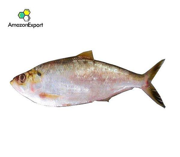 BONITO (Sarda sarda) -Amazon Export