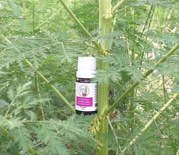 Óleo essencial Artemisia