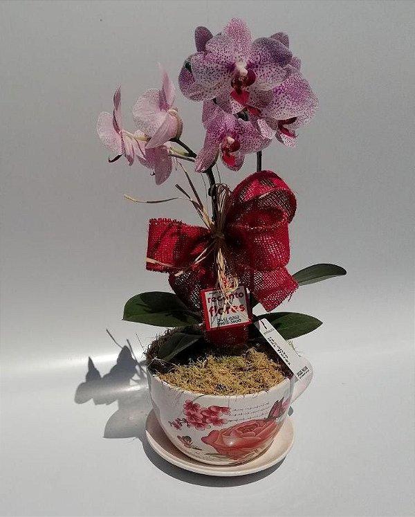 Orquídea na Xícara
