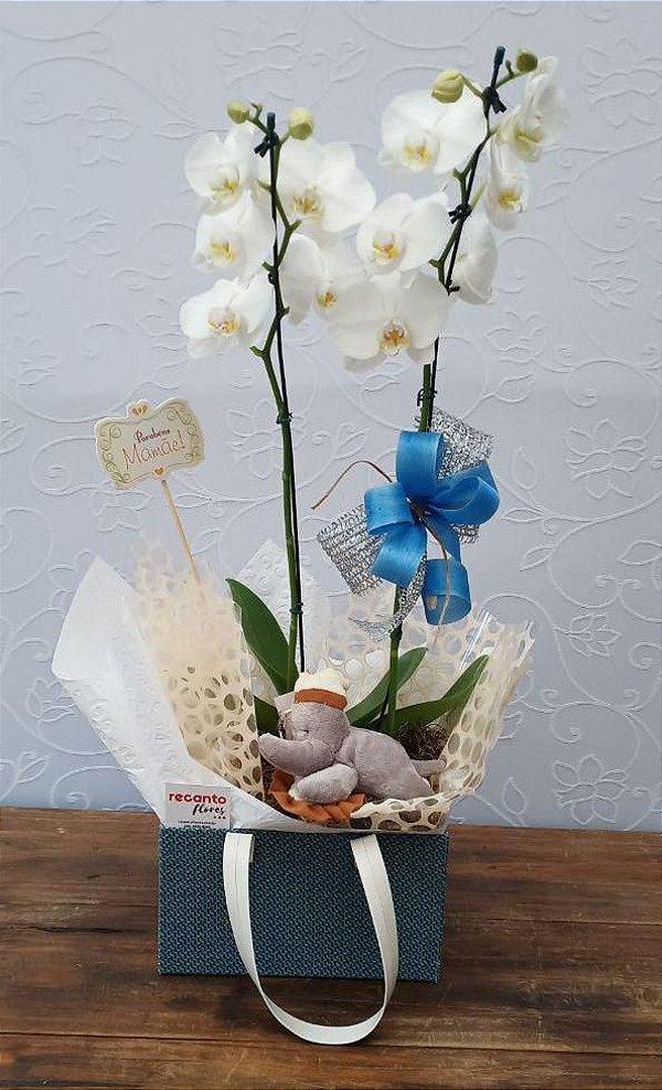 Orquídea Maternidade