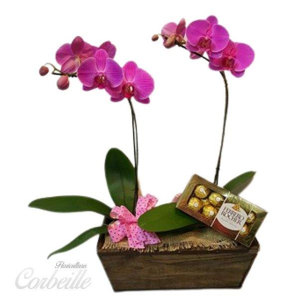 Orquídea Dupla Pink no Cachepot de Madeira com Caixa de Bombom Ferrero Rocher 8 unidades