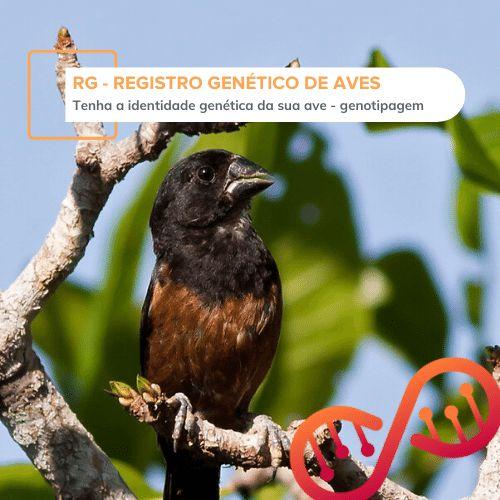 RG - Registro Genético de Aves (genotipagem)