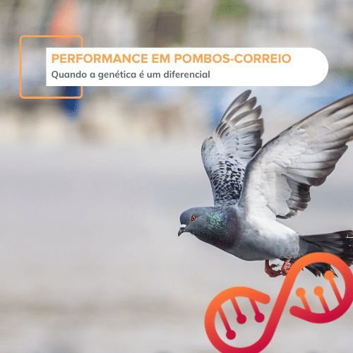 Performance em Pombos-Correio (genes LDHA, DRD4-1, e DRD4-2)