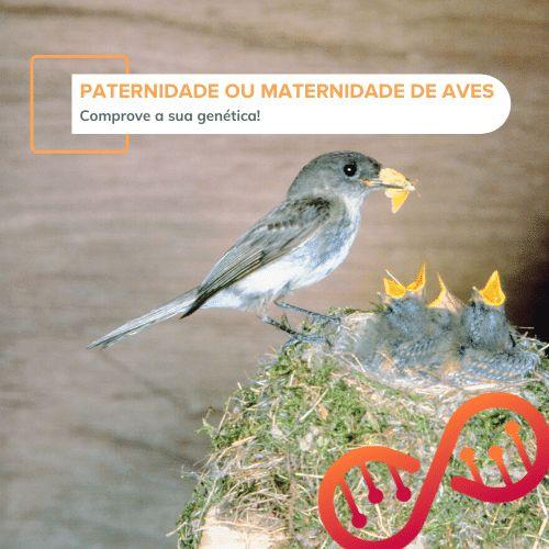 Paternidade ou Maternidade de Aves