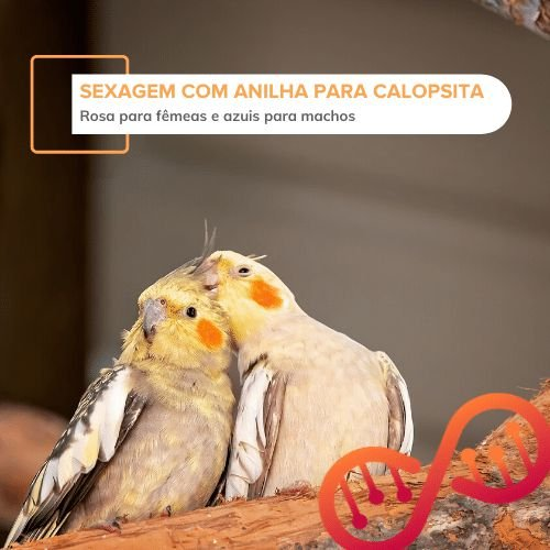 001. Sexagem de aves por DNA com Anilha para Calopsitas