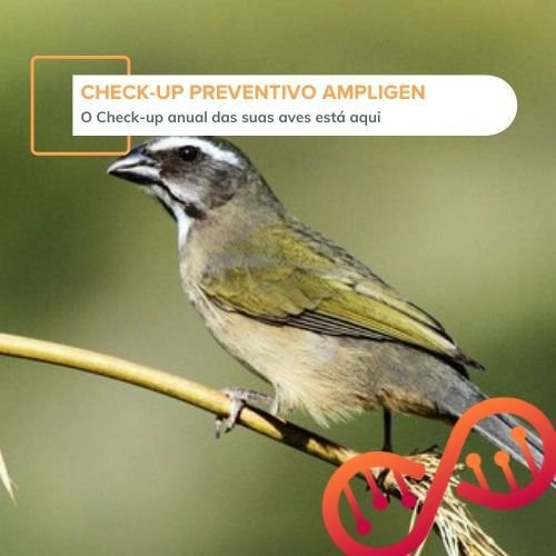 Check-up Preventivo Ampligen