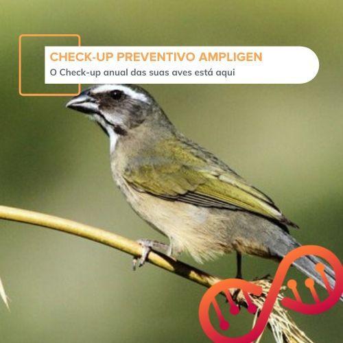 001. Check-up Preventivo Ampligen