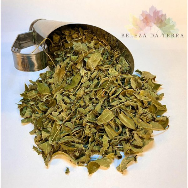 Moringa Oleifera   - BELEZA DA TERRA
