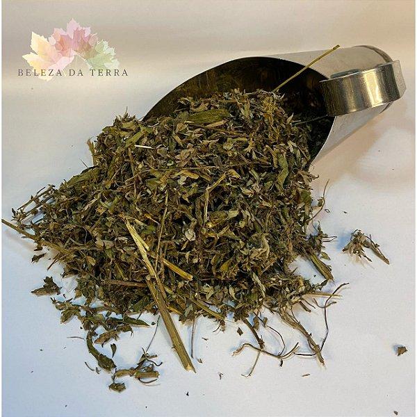 Artemisia - BELEZA DA TERRA