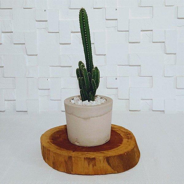 Vaso de cimento com Cactos Triangular