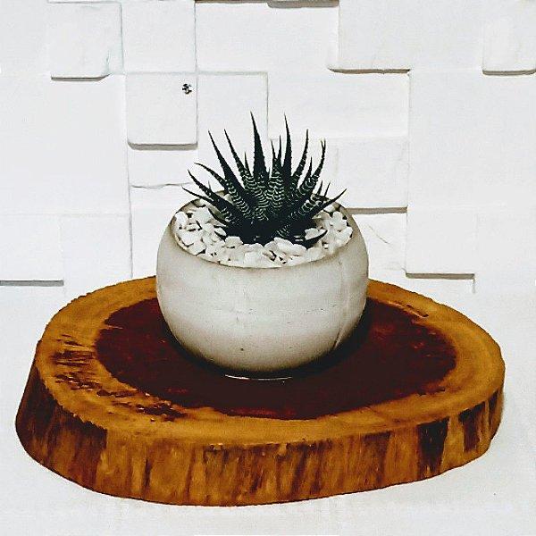 Vaso de cimento com suculenta