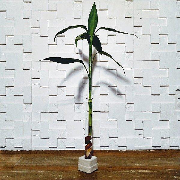 Bambu da sorte com pedras dos sete chacras
