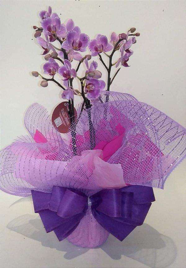 Mino Orquídea