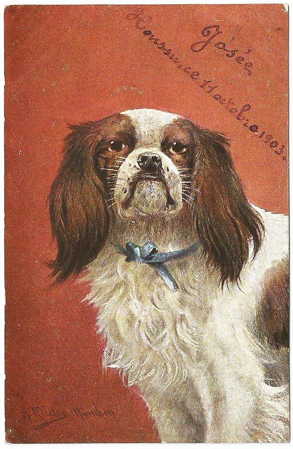 Cartão Postal Antigo Original Ilustrado - Tema Animais, Cachorro Pequinês, Circulado em 1903