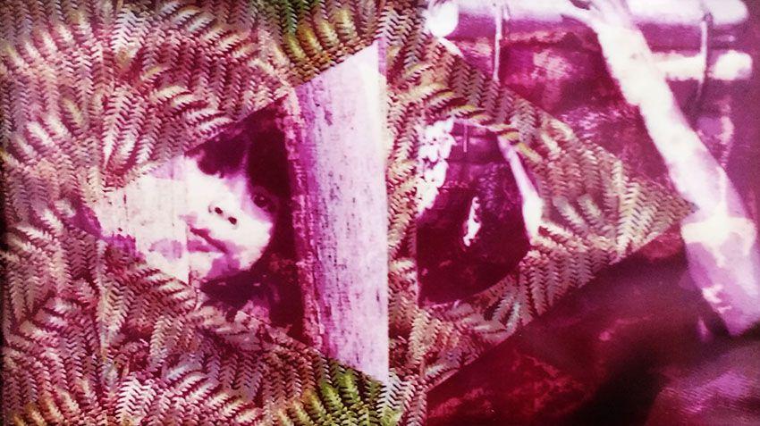 Claudia Pompeu - Fotografia, Montagem Original, Bandeira do Brasil e Indígenas, Anos 1990