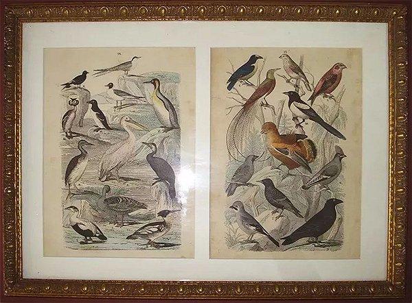 Quadro de duas Gravuras Antigas com Pássaros, Emoldurado