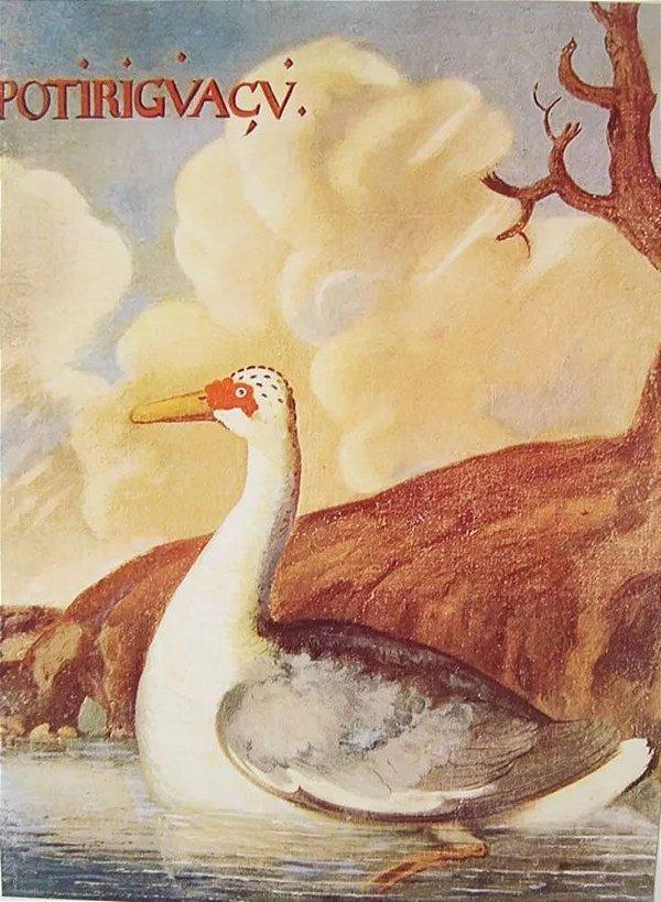 Albert Eckout - Pássaros do Brasil, Portfólio com 17 Gravuras Gráficas
