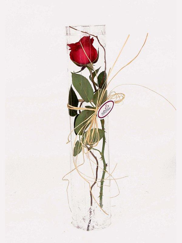 Rosas no Tubo Essencial