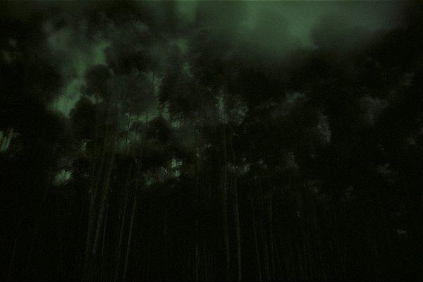 96 Fotografia . Eucaliptos . Danilo Zamboni