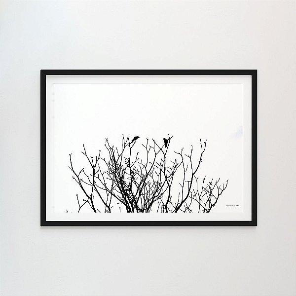 Prosa na árvore - Roberta Sucupira