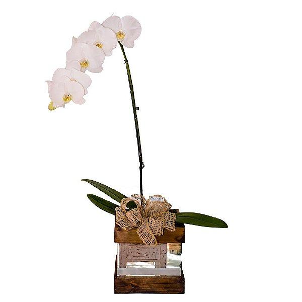 Orquídea Deslumbrante