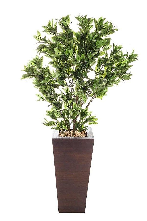 Vaso Ficus