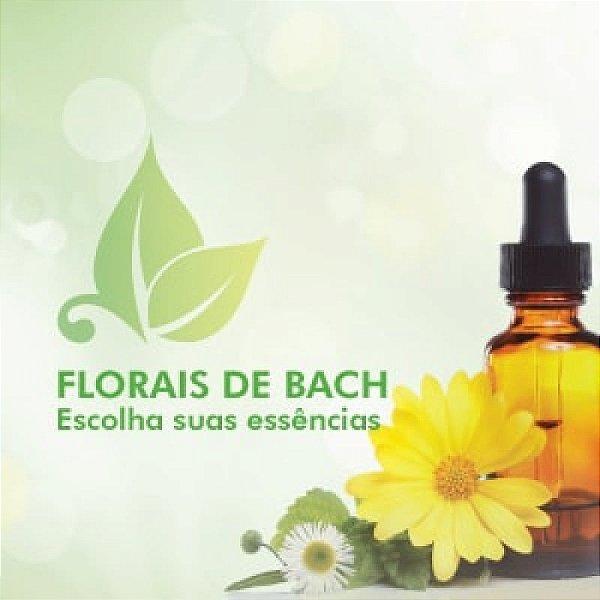 Floral De Bach Impatiens