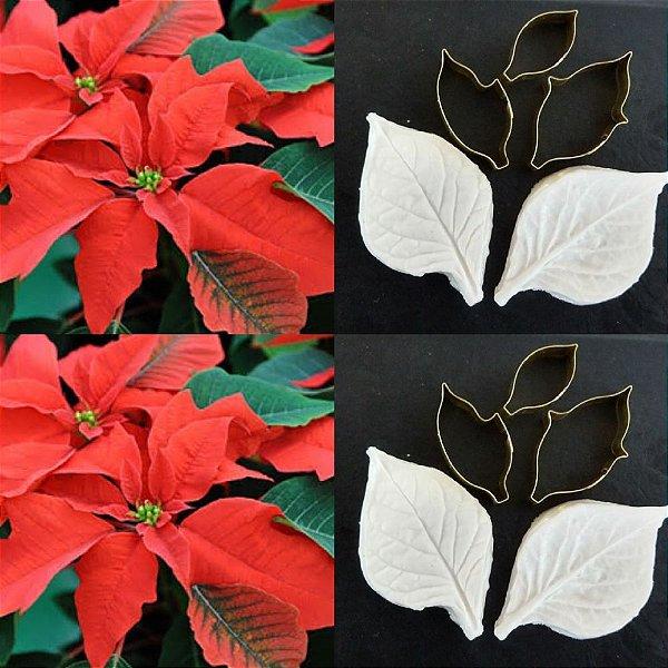 Cortador da flor polinésia / bico de papagaio / flor de natal